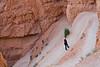 Bryce Canyon 8-30-10_1399