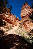Bryce Trail 1