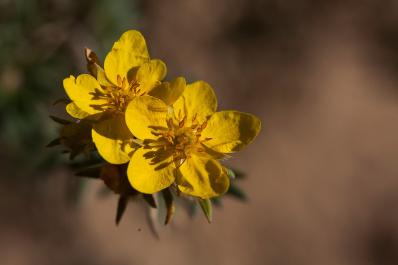 Red Canyon Flower
