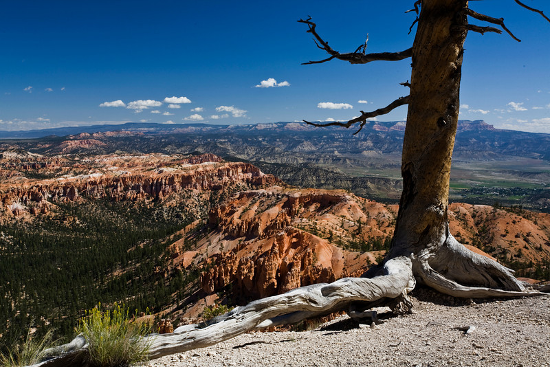 Bryce Canyon 8-30-10_1241