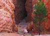 Navajo Trail HDR2