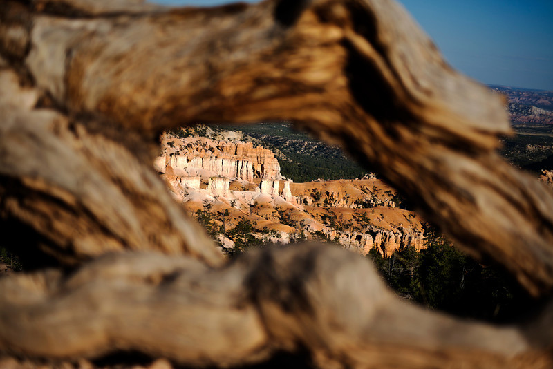 Bryce Canyon Root