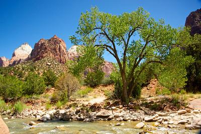 Tree Grow by Creek in Zion
