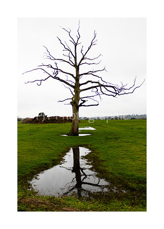 Lone tree and it's reflection
