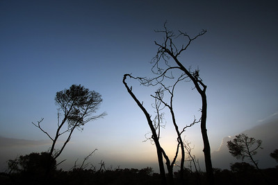 Naked Trees Left After the Fire