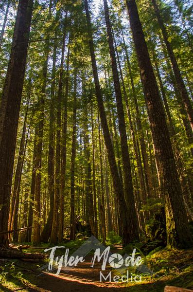 2  G Forest Sun V