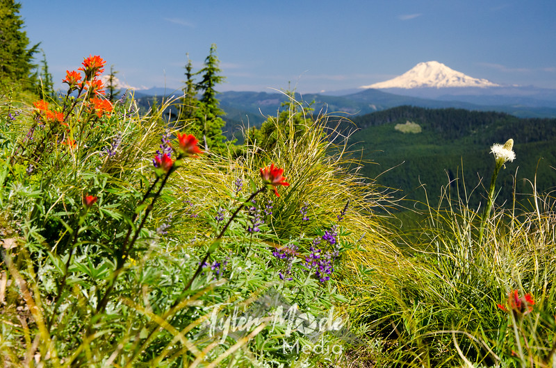 132  G Flowers and Mt  Adams