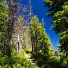 75  G Blue Skies and Trail V