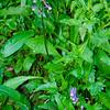 57  G Purple Flower V