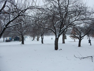 Bushnell park in the snow