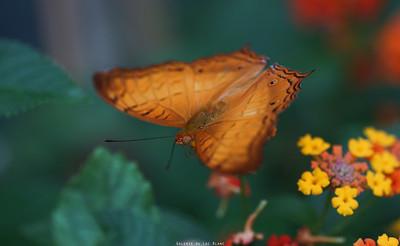 Butterflies 2014