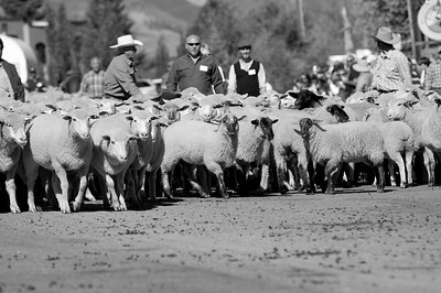 Sheep2BW