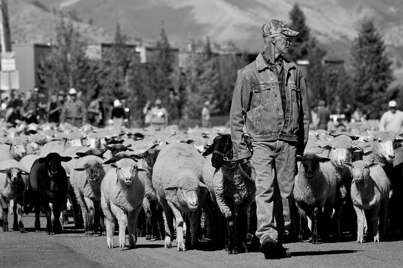 Sheep-ShepherdBW