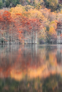 Autumn Reflections #2