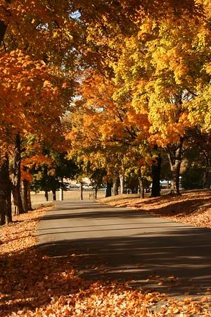 CA Fall Colors