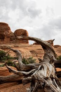 Devil's Garden Arches National Park