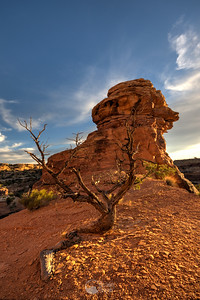 Big Spring Overlook Area Sunset Canyonlands National Park, Utah