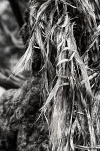Shredded Juniper