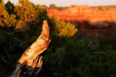 Murphy's Point Sunset Canyonlands National Park, Utah