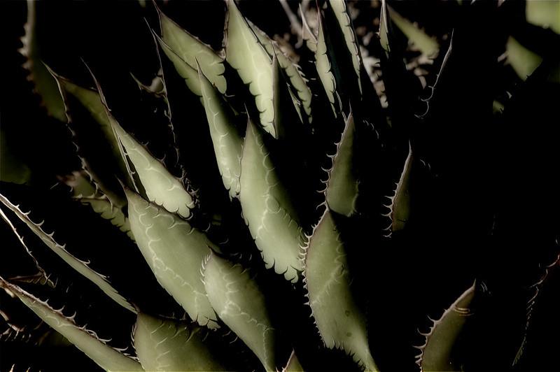 Moody Cactus