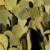 Sunlit Cactus