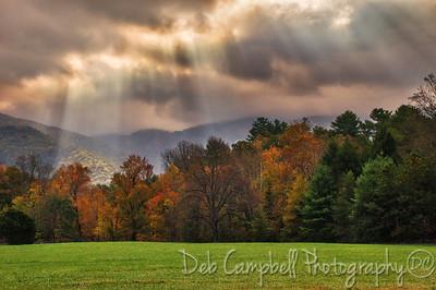 Sun rays on fall color