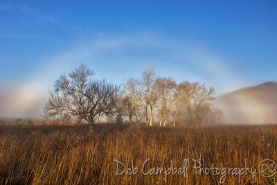 Autumn Fogbow