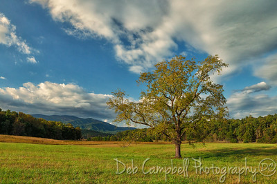 Walnut Tree Cades Cove Great Smoky Mountains