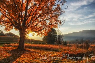 Autumn Illumination
