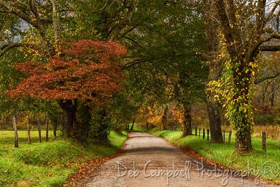 """Autumn on Sparks Lane"""