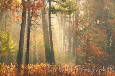 Burchfield Woods