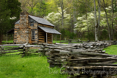John Oliver Cabin in Spring Dogwoods Cades Cove Great Smoky Mountains