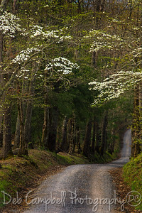 Sparks Lane in Spring Cades Cove Great Smoky Mountains