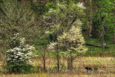 Bear among the Dogwood Trees