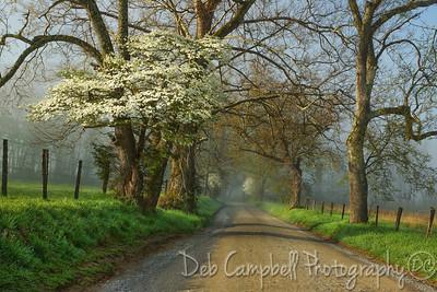 Spring on Sparks Lane