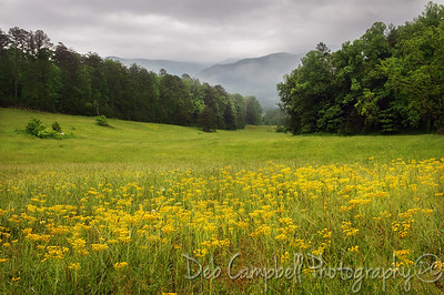 Late Spring Scenes from Cades Cove Great Smoky Mountains