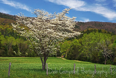 Spring in Cades Cove