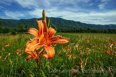 Wild Day Lilies and Thunderhead Mountain