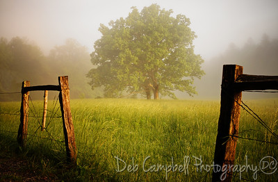 Golden Morning Cades Cove Great Smoky Mountains