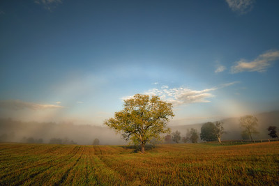 Fogbow over the Walnut Tree