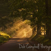 Sunrays on the loop road<br /> Cades Cove<br /> Great Smoky Mountains