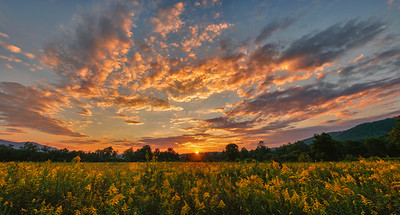 Goldenrod Sunset Panorama