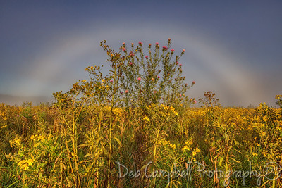 Wildflowers and a Fogbow