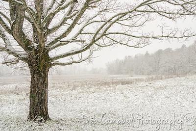 Scenes of Winter