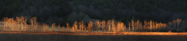 Tater Branch Gold Pano