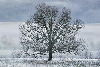 The Tree in frost