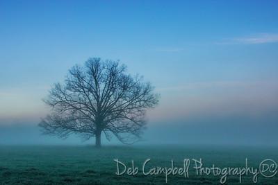 The Tree~Serenity