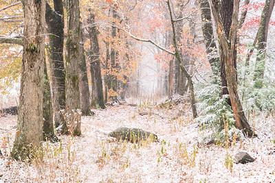 Shady Lane Autumn Snowfall