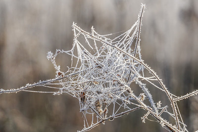Oh, what a tangled web we weave...