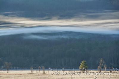 Lingering Mist